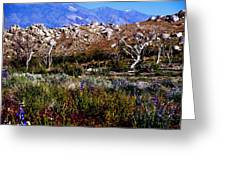 Spring In Onion Valley Greeting Card