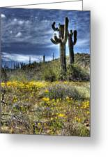 Spring In The Desert  Greeting Card