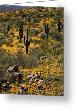 Spring In The Sonoran Desert  Greeting Card
