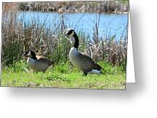 Spring In The Wetlands Greeting Card