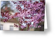 Spring In Town Greeting Card