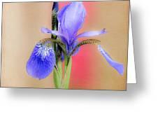 Spring Iris 2 Greeting Card