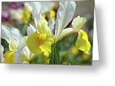 Spring Irises Flowers Art Prints Canvas Yellow White Iris Flowers Greeting Card