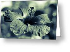 Spring Is Coming - Monochrome Greeting Card