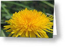 Spring Is In Bloom Greeting Card