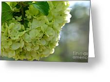 Spring Is In The Air -vines Botanical Garden Greeting Card