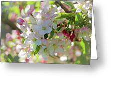 Cherry Kisses Greeting Card