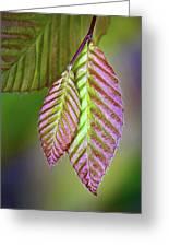 Spring Leaves Greeting Card