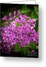 Spring Lilacs On Black Greeting Card