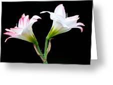 Spring Lilies Greeting Card