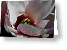 Spring Magnolia 2 Greeting Card