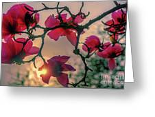 Spring Magnolia 6 Greeting Card