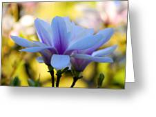 Spring Magnolia Greeting Card