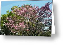 Spring Magnolia In Winter Park  Greeting Card