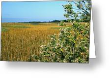 Spring Marsh Greeting Card