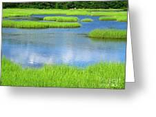 Spring Marsh Grasses Greeting Card