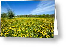 Spring Meadow Full Of Dandelions Flowers And Green Grass Greeting Card