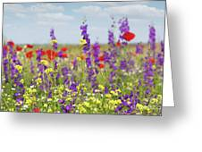 Spring Meadow With Flowers Nature Scene Greeting Card