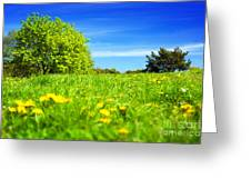Spring Meadow With Green Grass Greeting Card
