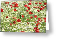 Spring Meadow With Poppy And Chamomile Flowers Greeting Card