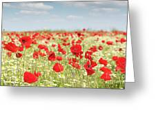 Spring Meadow With Wild Flowers Greeting Card