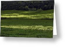 Spring Meadows Of Wildflowers Greeting Card