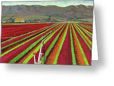 Spring Mix Lettuce Fields Greeting Card