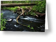 Spring Morning At Crum Elbow Creek I Greeting Card
