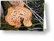 Spring Mushrooms Greeting Card
