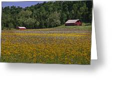 Spring Mustard And Barns Greeting Card by Rick DeCroes
