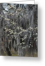 Spring Mystery Greeting Card