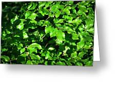 Spring New Beech Leaves Greeting Card