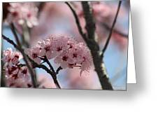 Spring On The Air Greeting Card