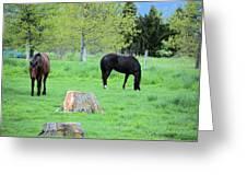 Spring Pastures Greeting Card