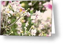 Spring Petals Greeting Card