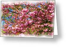 Spring Pink Blossoms Greeting Card