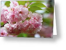 Spring Pink, Green And White Greeting Card