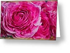 Spring Pink Roses Greeting Card