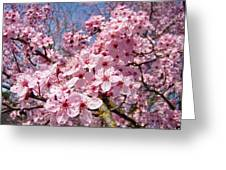 Spring Pink Tree Blossoms Art Print Baslee Troutman Greeting Card