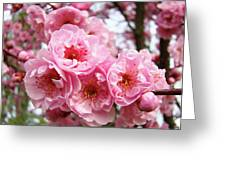 Spring Pink Tree Blossoms Art Prints Baslee Troutman Greeting Card