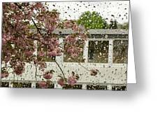 Spring Rain Outside The Window And Sakura Greeting Card