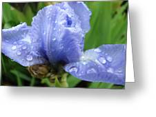 Spring Raindrops Blue Iris Flower Water Baslee Troutman Greeting Card