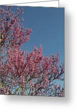Spring Redbud Tree Greeting Card