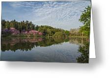 Spring Redbud Trees Greeting Card