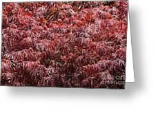 Spring Reds Greeting Card