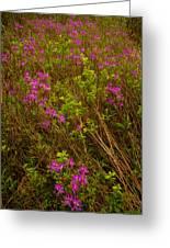 Spring Rhodora Blossoms Greeting Card