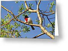 Spring Rose Breasted Grosbeak Greeting Card