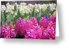 Spring Round Up Greeting Card