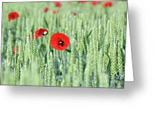 Spring Scene Green Wheat And Poppy Flowers Greeting Card