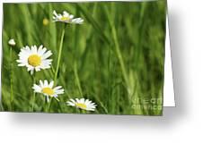 Spring Scene White Wild Flowers Greeting Card